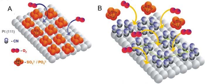 Representación esquemática del proceso de ruptura del enlace O-O en la molécula de oxígeno (O2) en presencia de ácido sulfúrico o ácido fosfórico, sobre platino limpio (A) y platino modificado con cianuro (B)./ CSIC